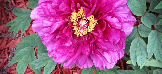 aroundcampus-flower
